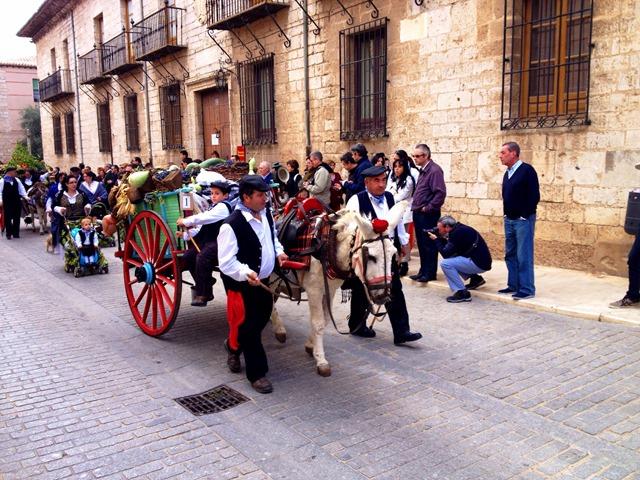 Mule Fiesta Vendimia Toro